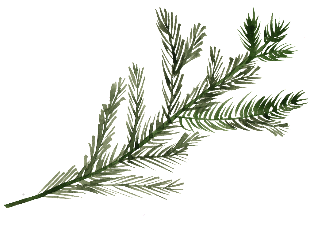 1024x739 Watercolor Pine Tree Branch Png Free Download Png Files