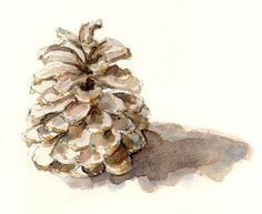 Watercolor Pinecone