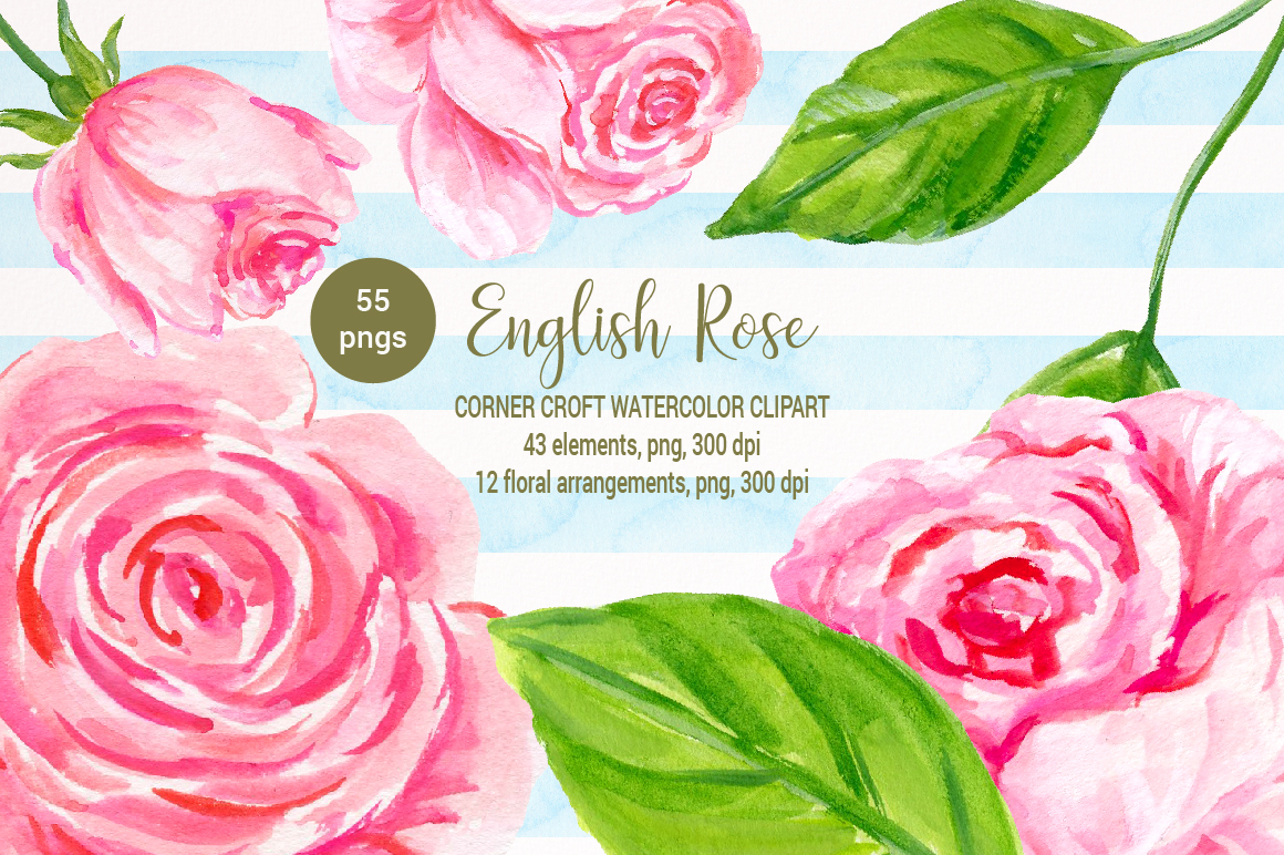 1160x772 English Rose Clipart, Watercolor Pink Rose By Cornercroft