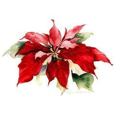 236x236 237 Best Watercolor Poinsettias Images In 2018