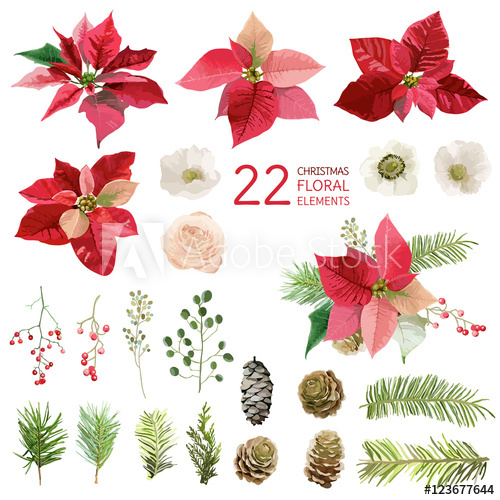 500x500 Poinsettia Flowers And Christmas Floral Elements