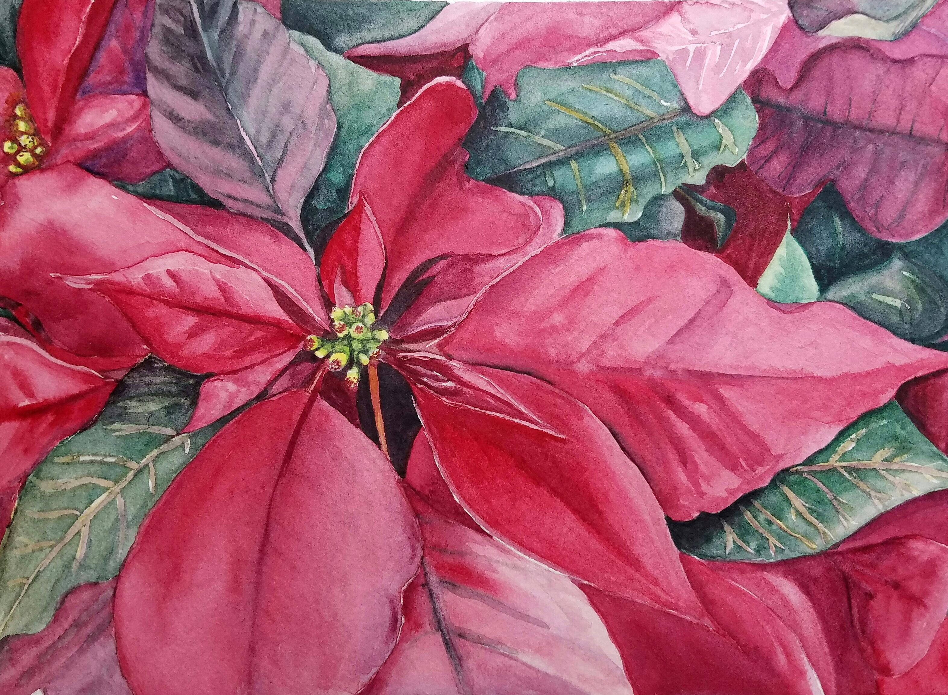 3145x2306 Poinsettia Original Watercolor Esther Beler Wodrich