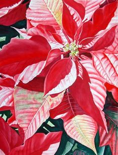 236x310 65 Best Watercolor Poinsettias Images In 2018