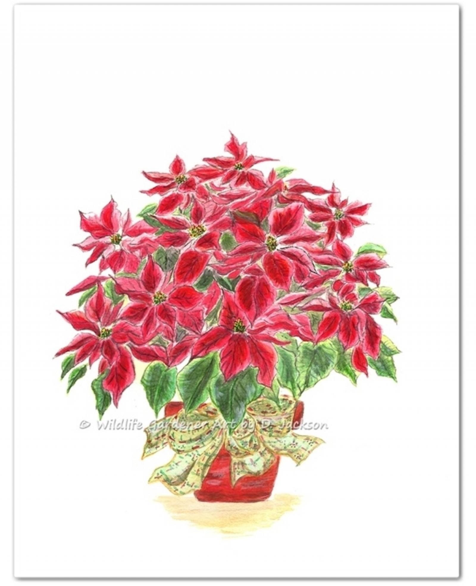 1600x1969 Red Christmas Poinsettia Plant Watercolor Art Print Wildlife