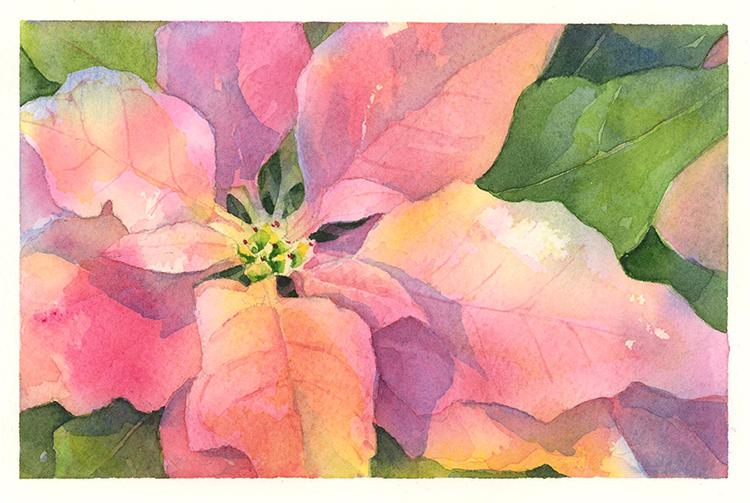 750x503 Poinsettia Drawn