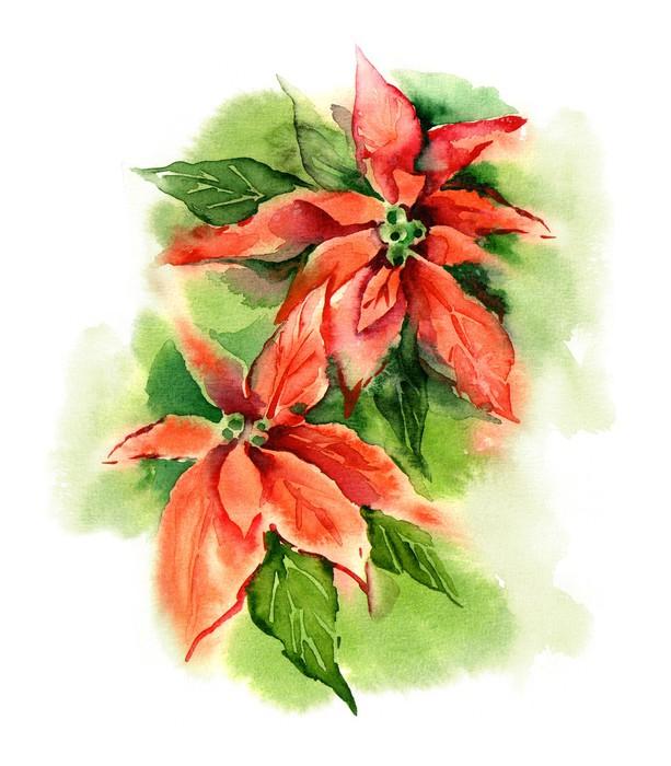 613x700 Watercolor Poinsettia (Bethlehem Star) Wall Mural We