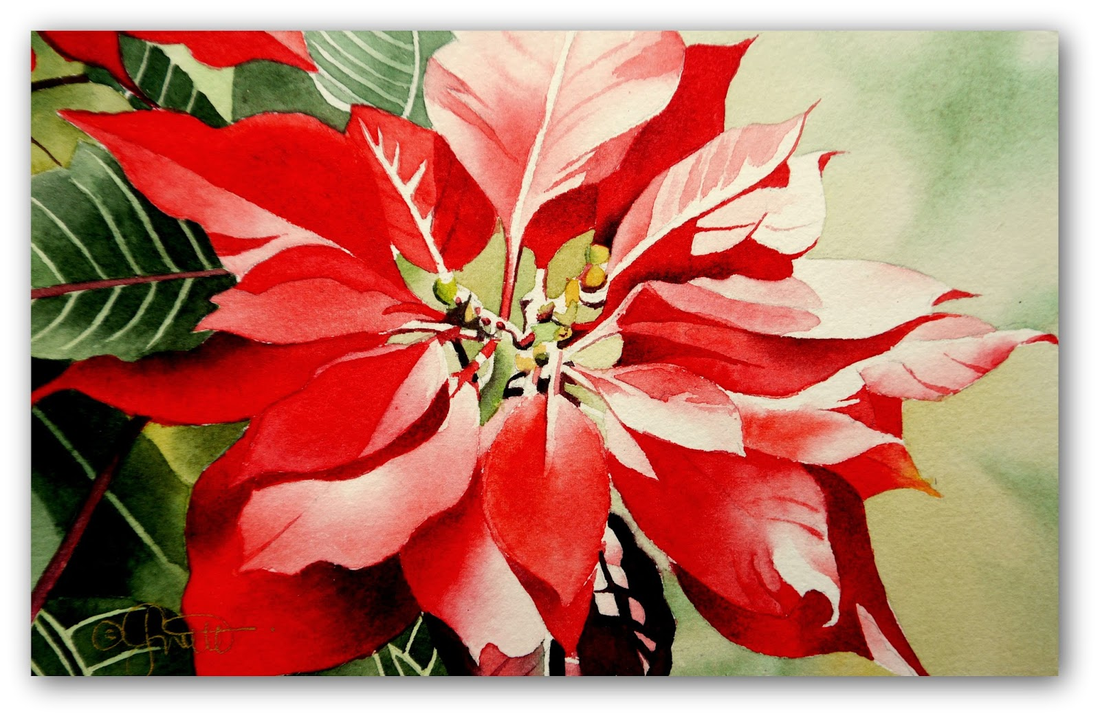 1600x1044 Contemporary Realism Red Poinsettia, New Watercolor Amp Video