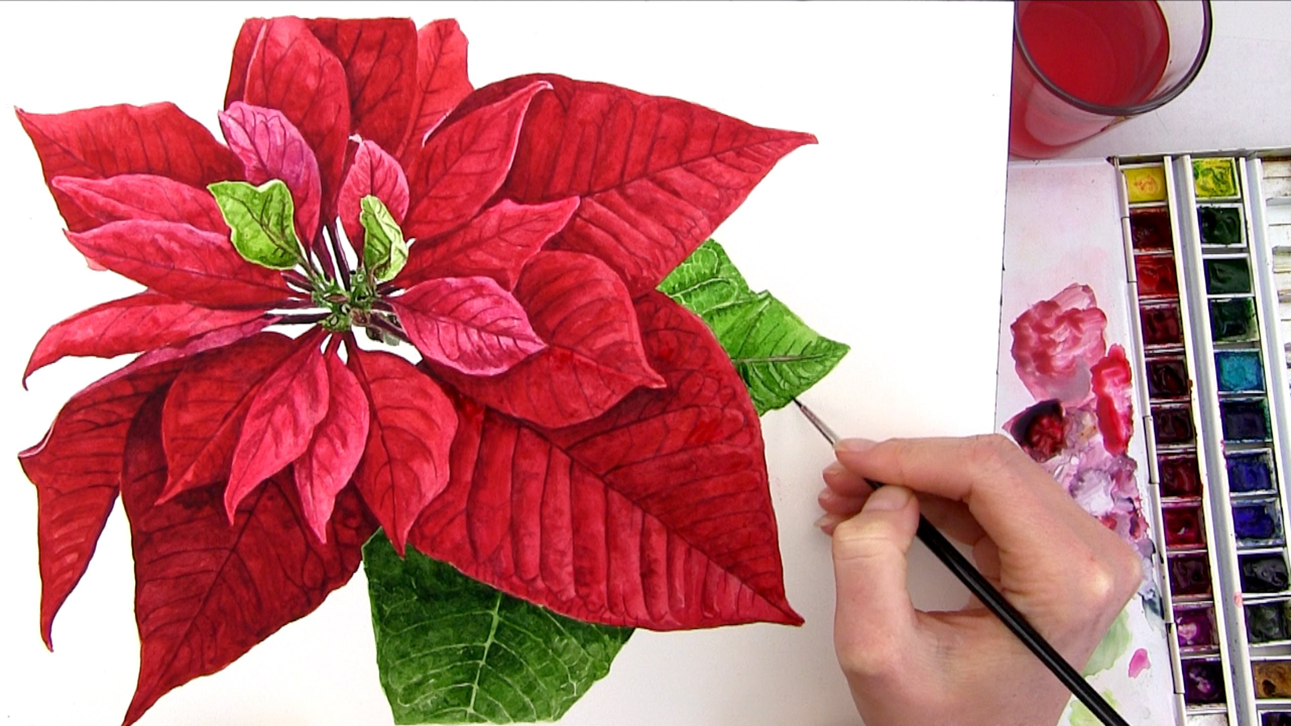 2560x1440 How To Paint A Realistic Poinsettia For Your Christmas Card In