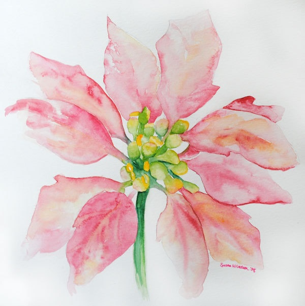 Watercolor Poinsettia Flower