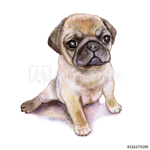 500x500 Watercolor Closeup Portrait Of Chinese Wrinkled Pug Dog Puppy