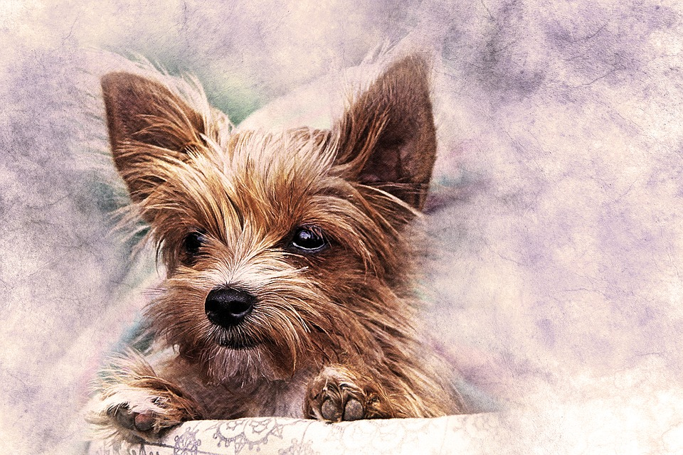 960x640 Free Photo Nature Dog Art Pet Watercolor Puppy Abstract