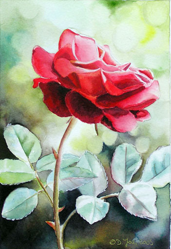 351x510 Rote Rose Gemalt In Aquarell,red Rose Small Watercolor Painting,