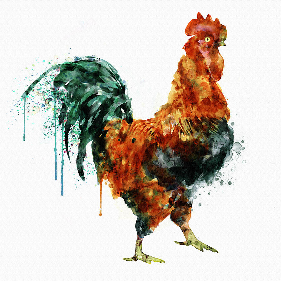 900x900 Rooster Watercolor Painting Painting By Marian Voicu