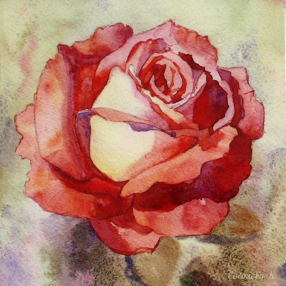 570x570 Rose Watercolor Rose Painting Watercolor Painting Flower Etsy