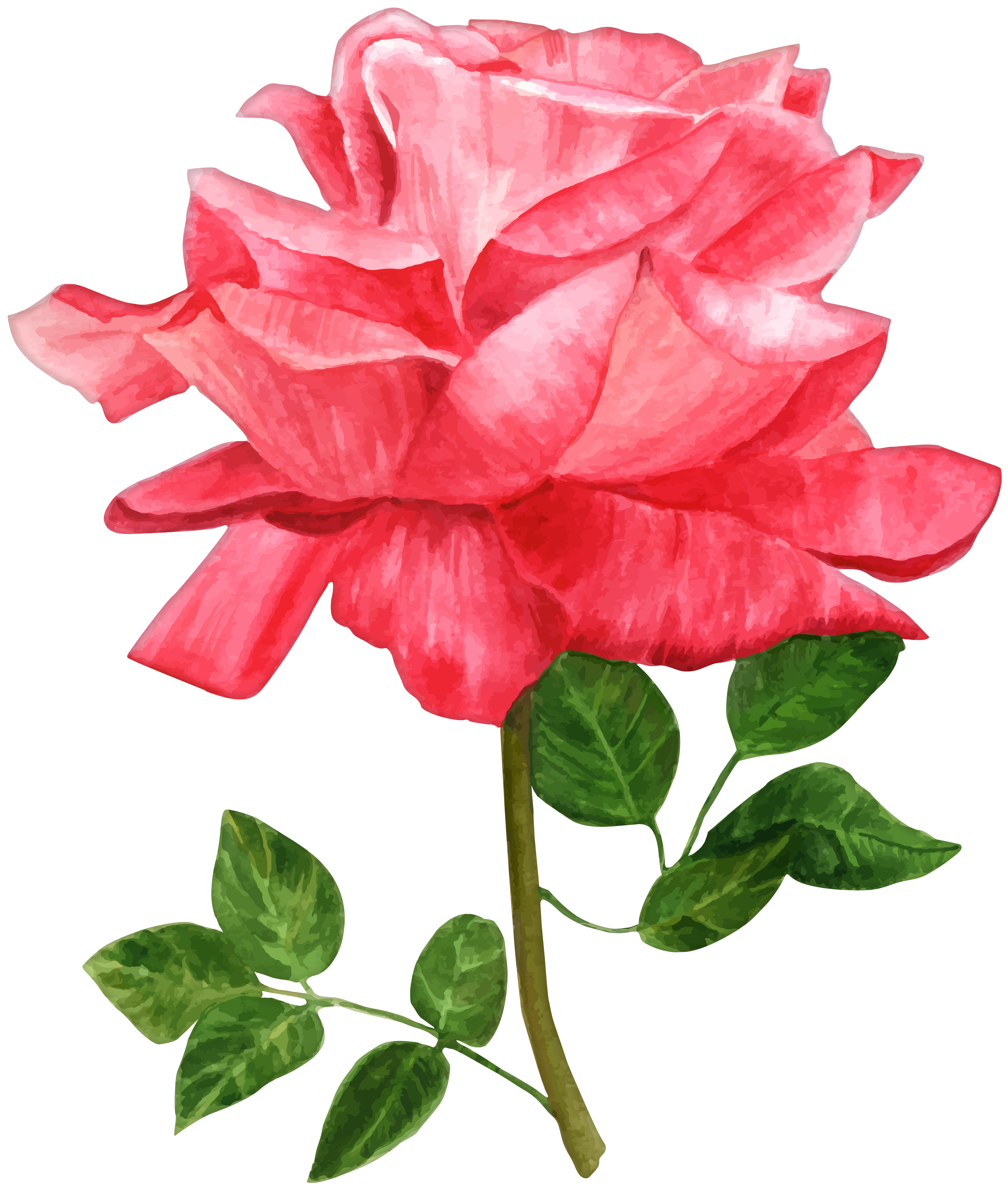 Watercolor Rose Clipart