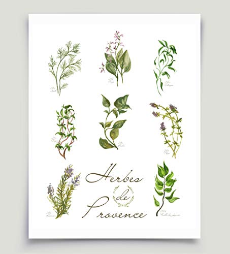 453x500 French Watercolor Herbs Art Herbes De Provence Basil