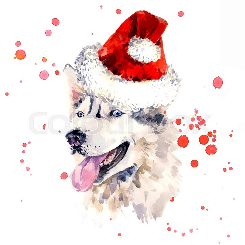 800x800 Watercolor Sheepdog In Red Santa Clause Hat. Portrait Of Siberian