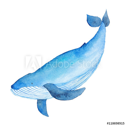 500x500 Blue Whale Watercolor Hand Painted Illustration Sea Animals Blue