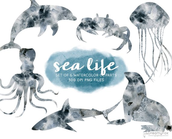 570x459 Watercolor Sea Animals Clip Art Set Sea Life Clipart Ocean Etsy