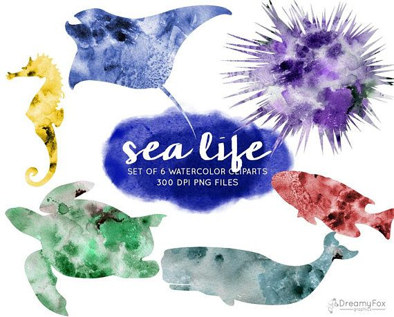 570x459 Set Of 6 Watercolor Sea Life Cliparts, Sea Animals Digital Image