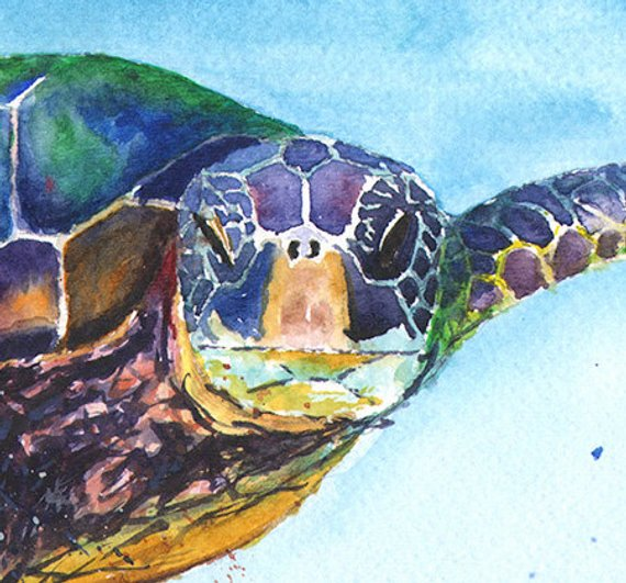 570x531 Turtle Watercolor Sea Life Art Sea Turtle Print Marine Etsy