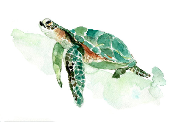 570x403 Sea Turtle Watercolor Print, Sea Turtle Painting, Sea Life