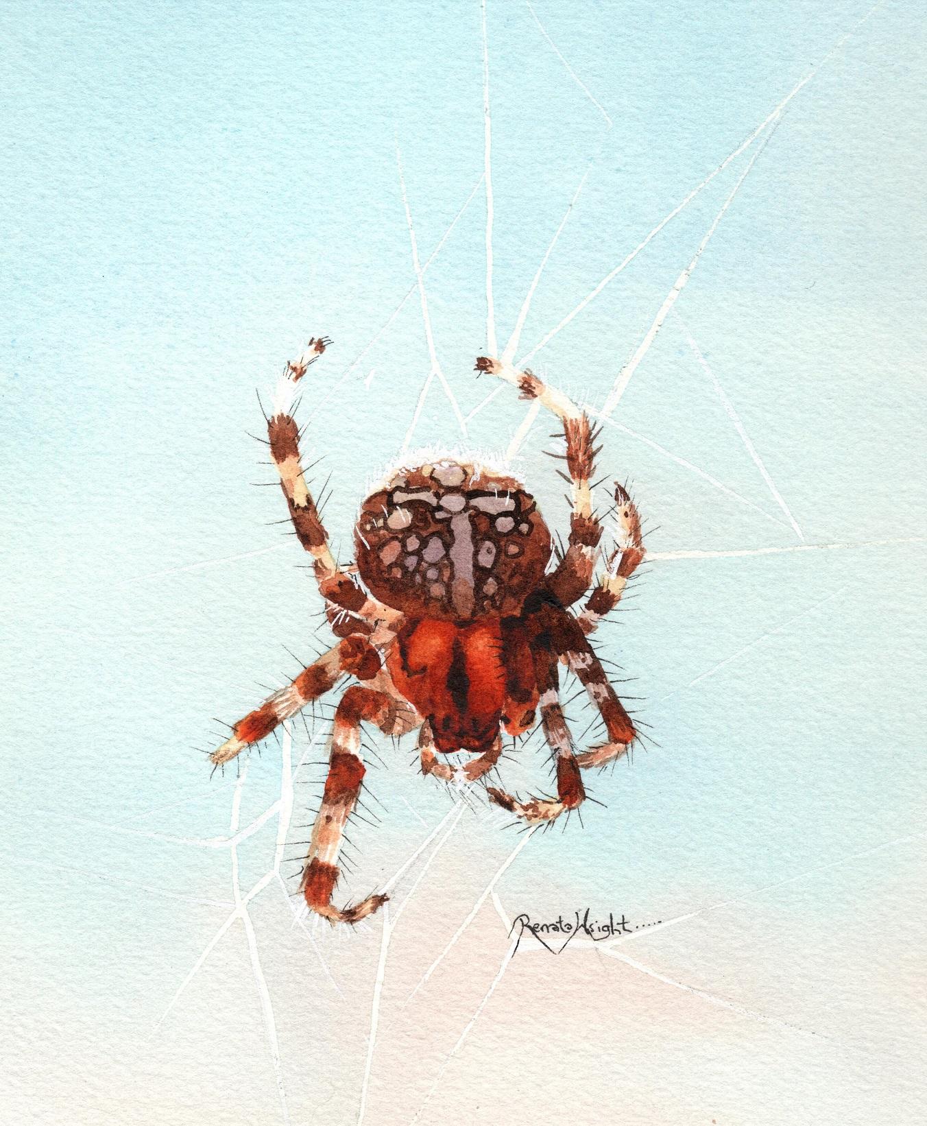 Watercolor Spider