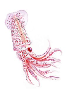 Watercolor Squid