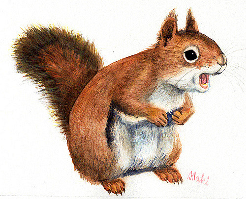 500x406 American Red Squirrel Watercolor Painting Of American Red