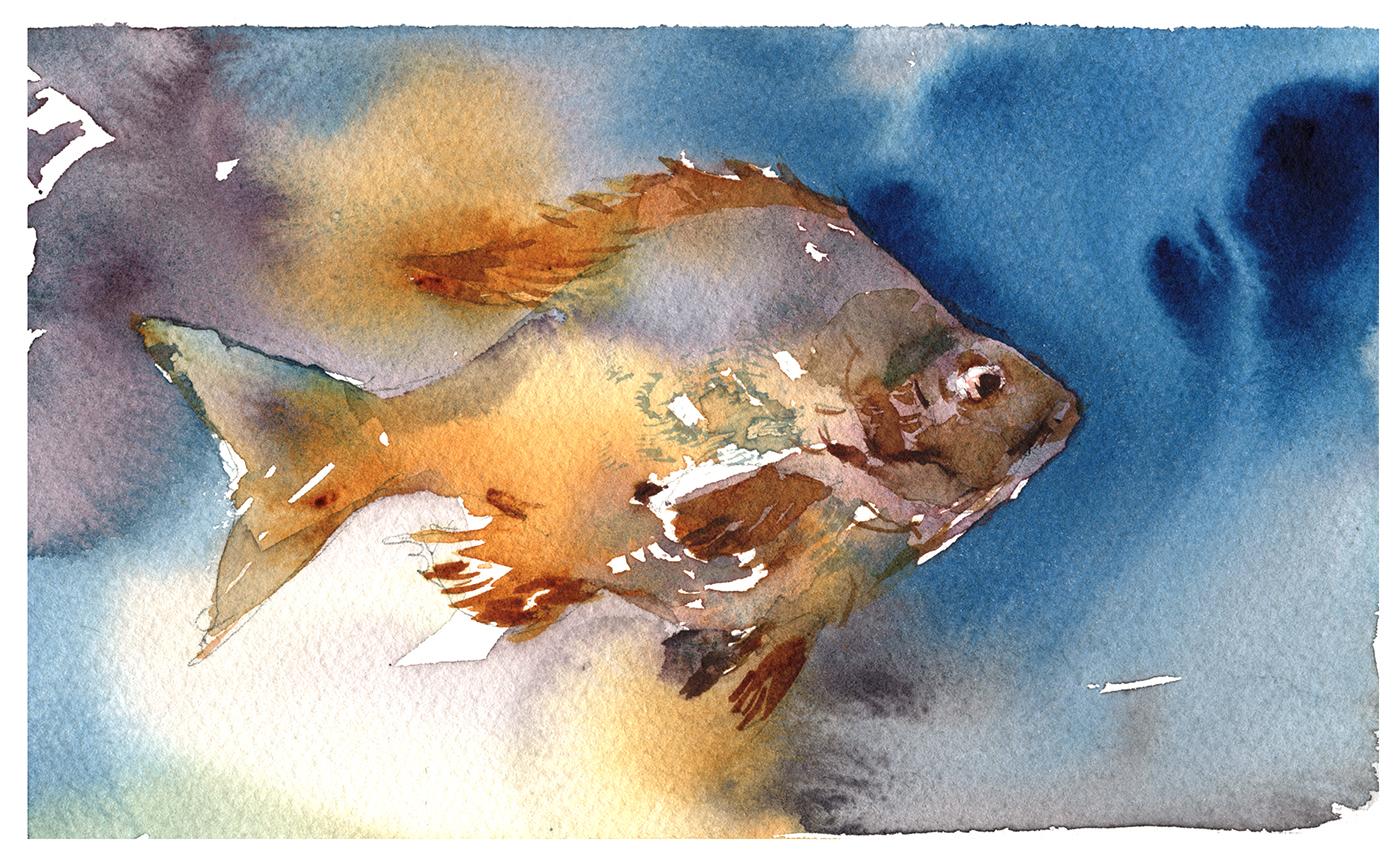 1400x860 Tasty Watercolor Fish In A Few Easy Steps! Citizen Sketcher