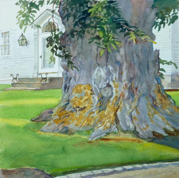 602x600 Nature Amp Man, Elm On Spring Street En Plein Air Watercolor