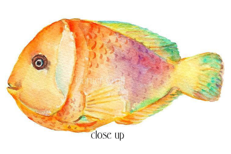 757x505 Tropical Fish Clipart, Watercolor Tropical Fish, Sea Fish