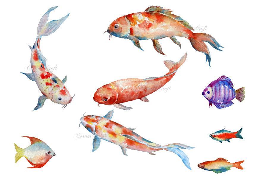 858x621 Watercolor Clipart Koi Carp, Fish, Red Fish, Fish Illustration