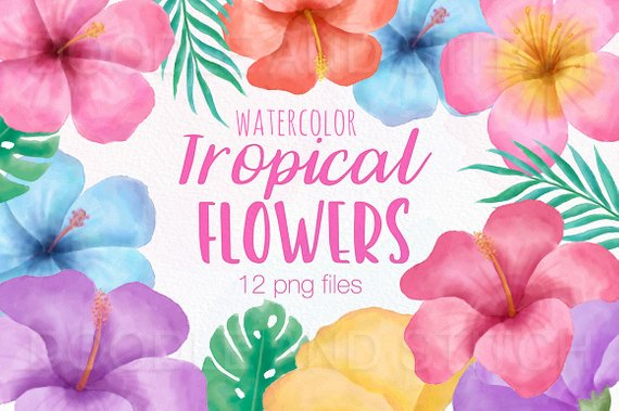 570x379 Tropical Flower Clipart Illustrations Watercolor Tropical Etsy