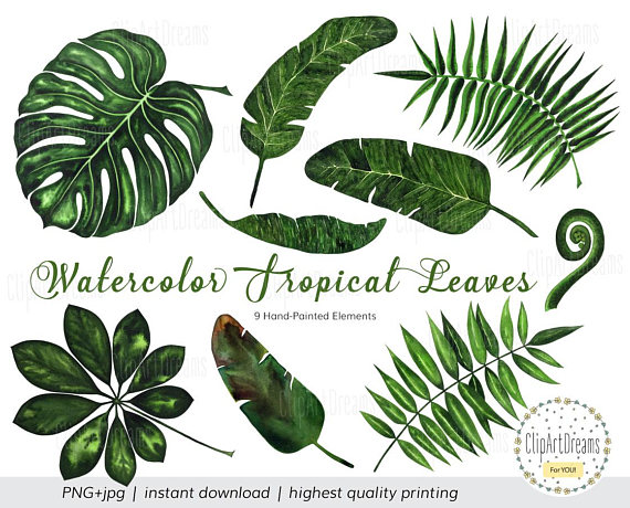 570x460 Tropical Leaf Clipart, Tropical Leaves Watercolor Clipart