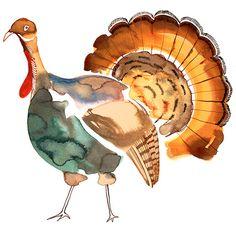 Watercolor Turkey