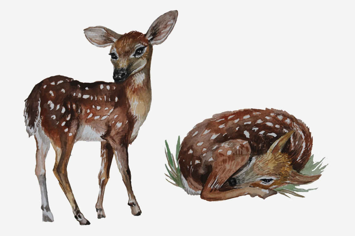 1160x772 Watercolor Woodland Animals By Dream In Watercolor