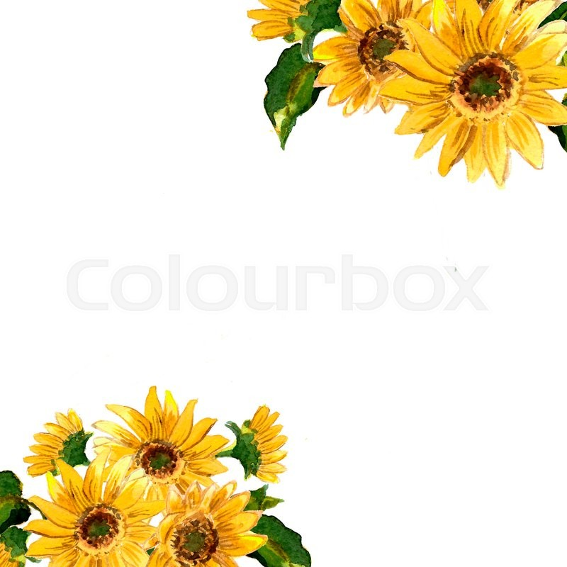 800x800 The Pattern Of Blooming Yellow Flowers Sunflower Painted In