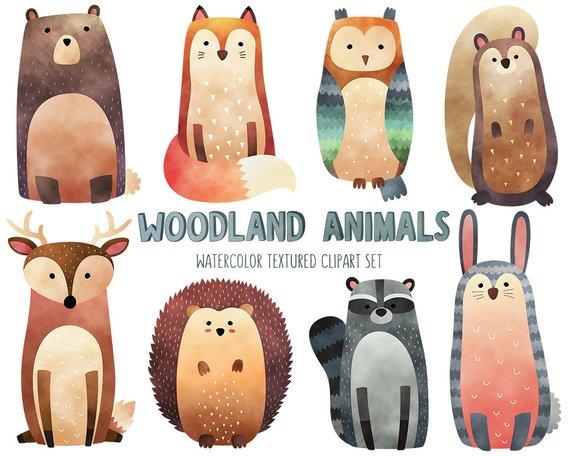 570x456 Watercolor Woodland Animals Clipart Cute Animal Clip Art Set Etsy
