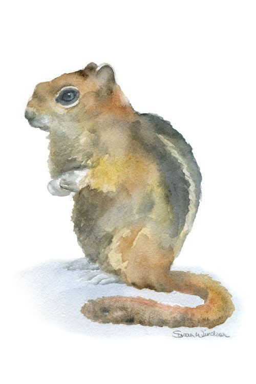 500x750 Chipmunk Watercolor Chipmunks, Watercolor And Portraits